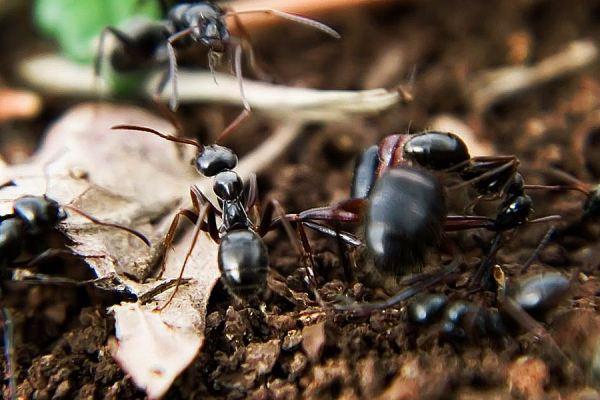 Cours sur la « Biodiversité dans les sols – Importance et menaces »