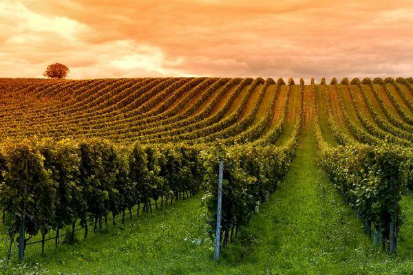 Encadrement du stage BTSA Viticulture – Œnologie