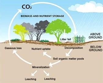 Illustration Séquestration Carbone