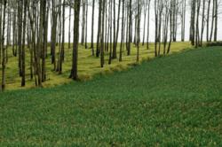 La gestion de l'usage                                                des sols à l'échelle des                                                paysages est une des                                                solutions pour réduire le                                                changement climatique et                                                s'y adapter. © B.                                                Locatelli, Cirad